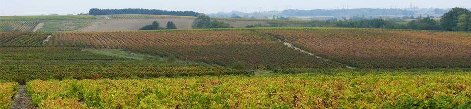 Slide paysage vigne